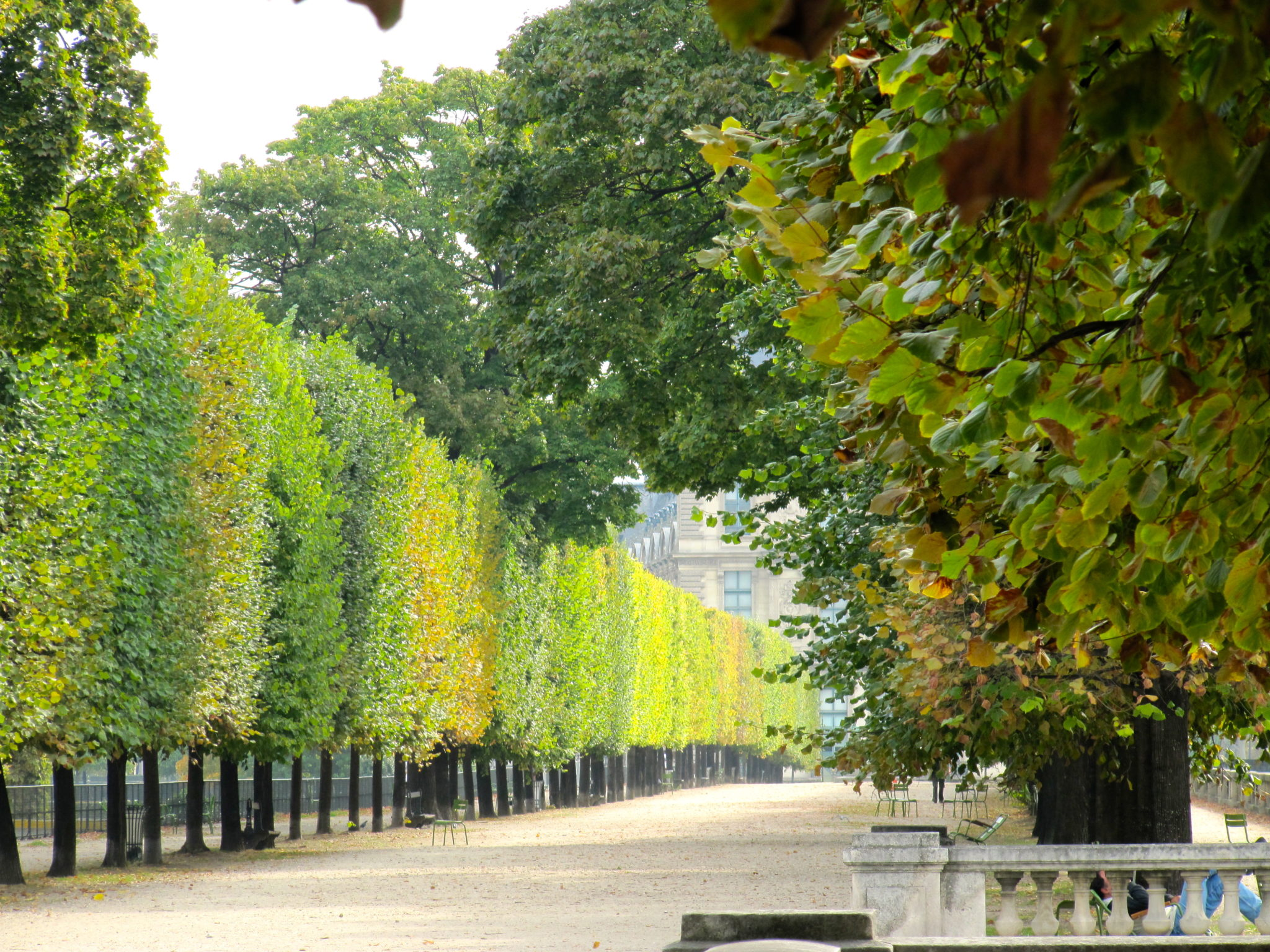 Perfectly clipped horse-chestnut trees on Champs-Élysées
