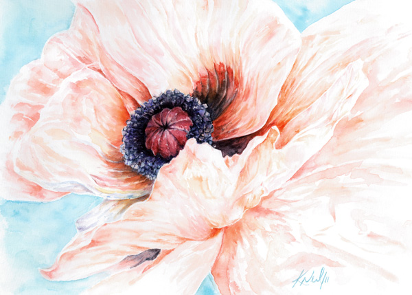 Oriental poppy, watercolour, 2011