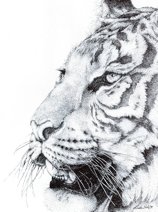 Tiger, pen and ink, 1999