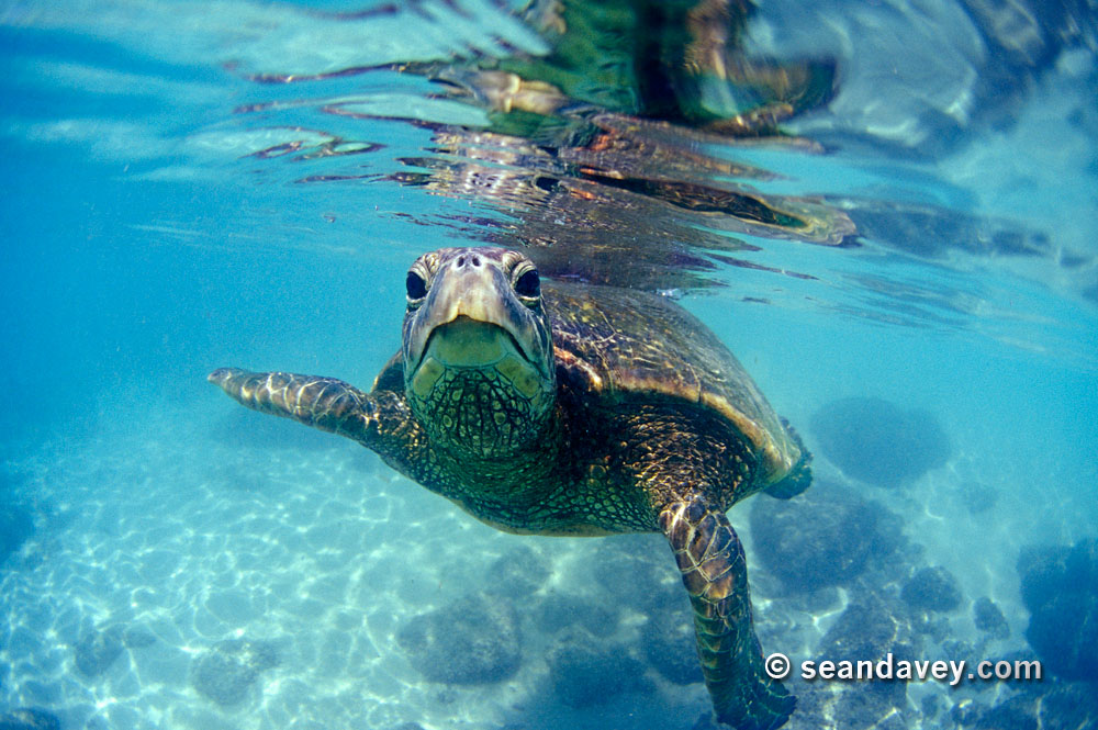 Sea turtle (Image via Surf Photography)