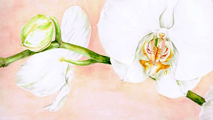 Orchids, watercolour, 2011