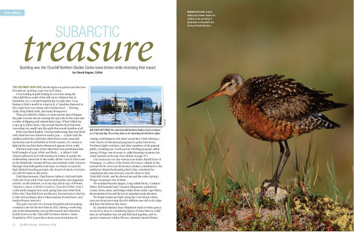 Subarctic Treasure article in Bird Watching magazine