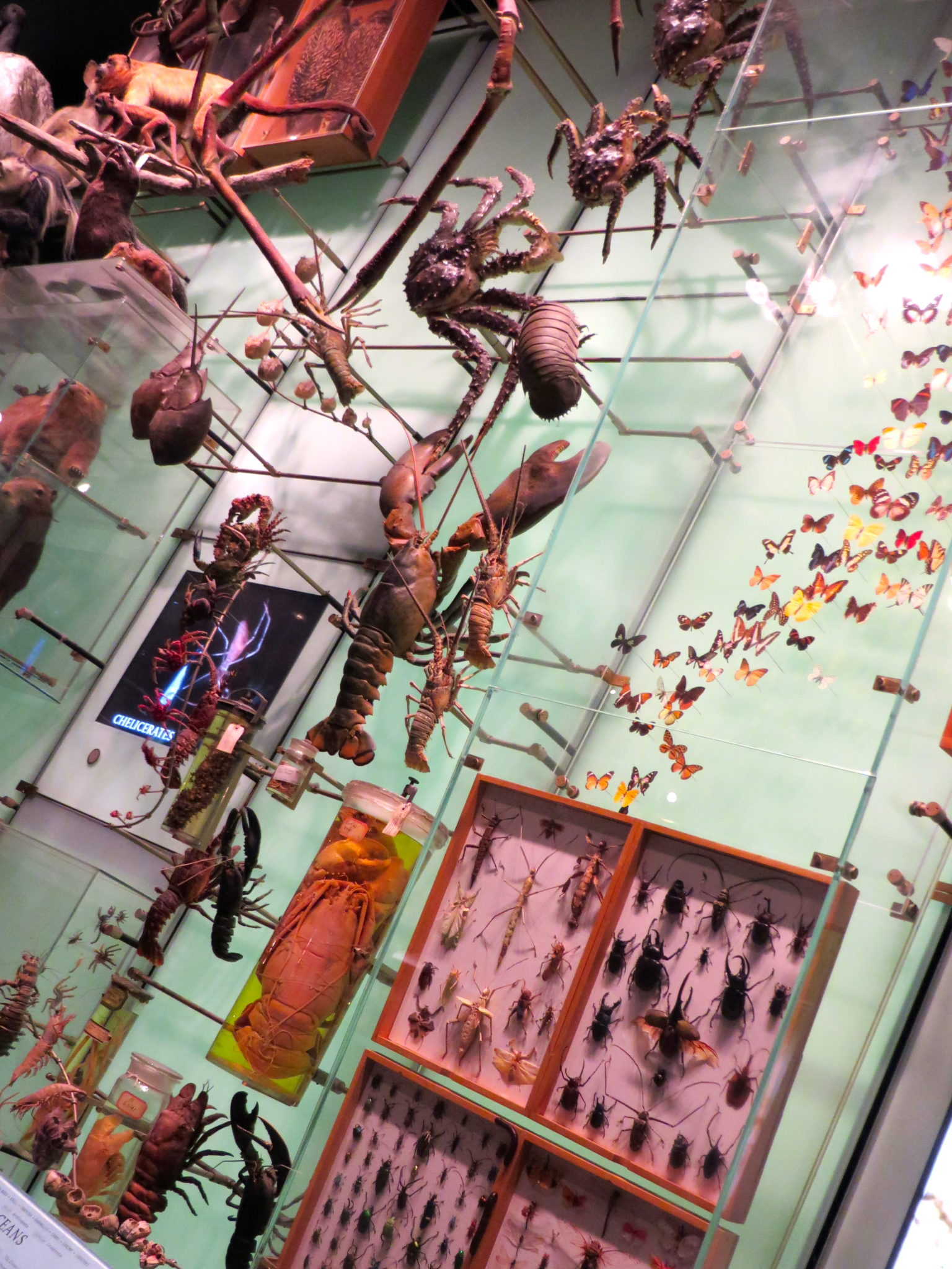 The Spectrum of Life, Hall of Biodiversity, American Museum of Natural History.