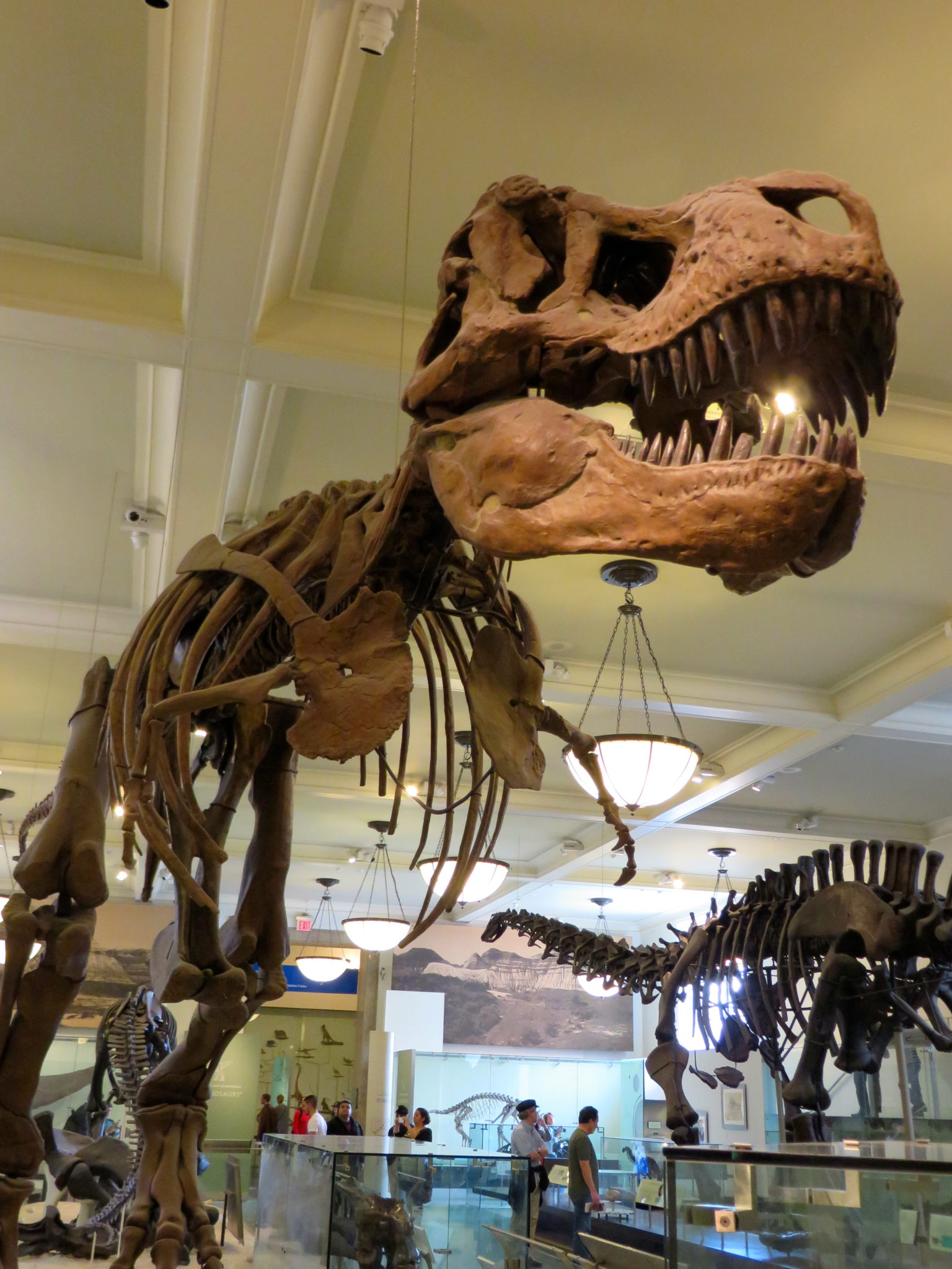 Hall of Saurischian Dinosaurs, American Museum of Natural History.