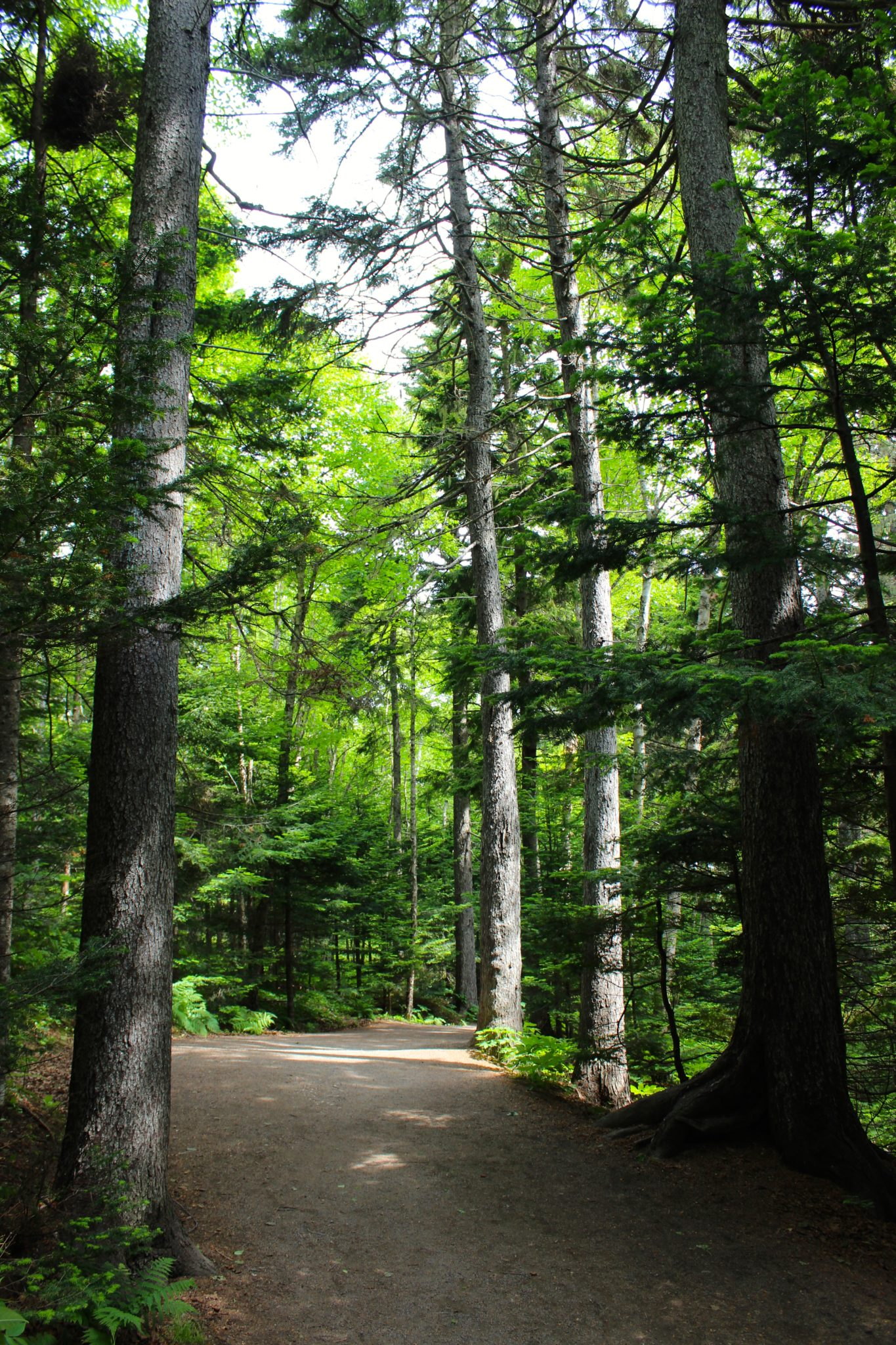 The path to Hopewell Rocks.