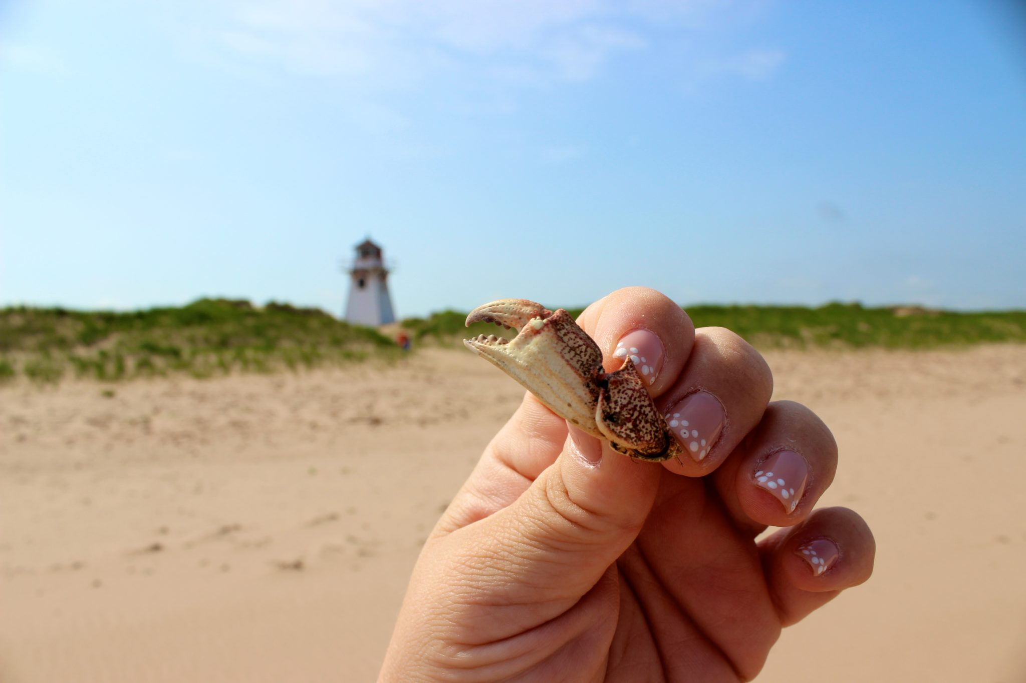 Found a little crab claw on the beach.