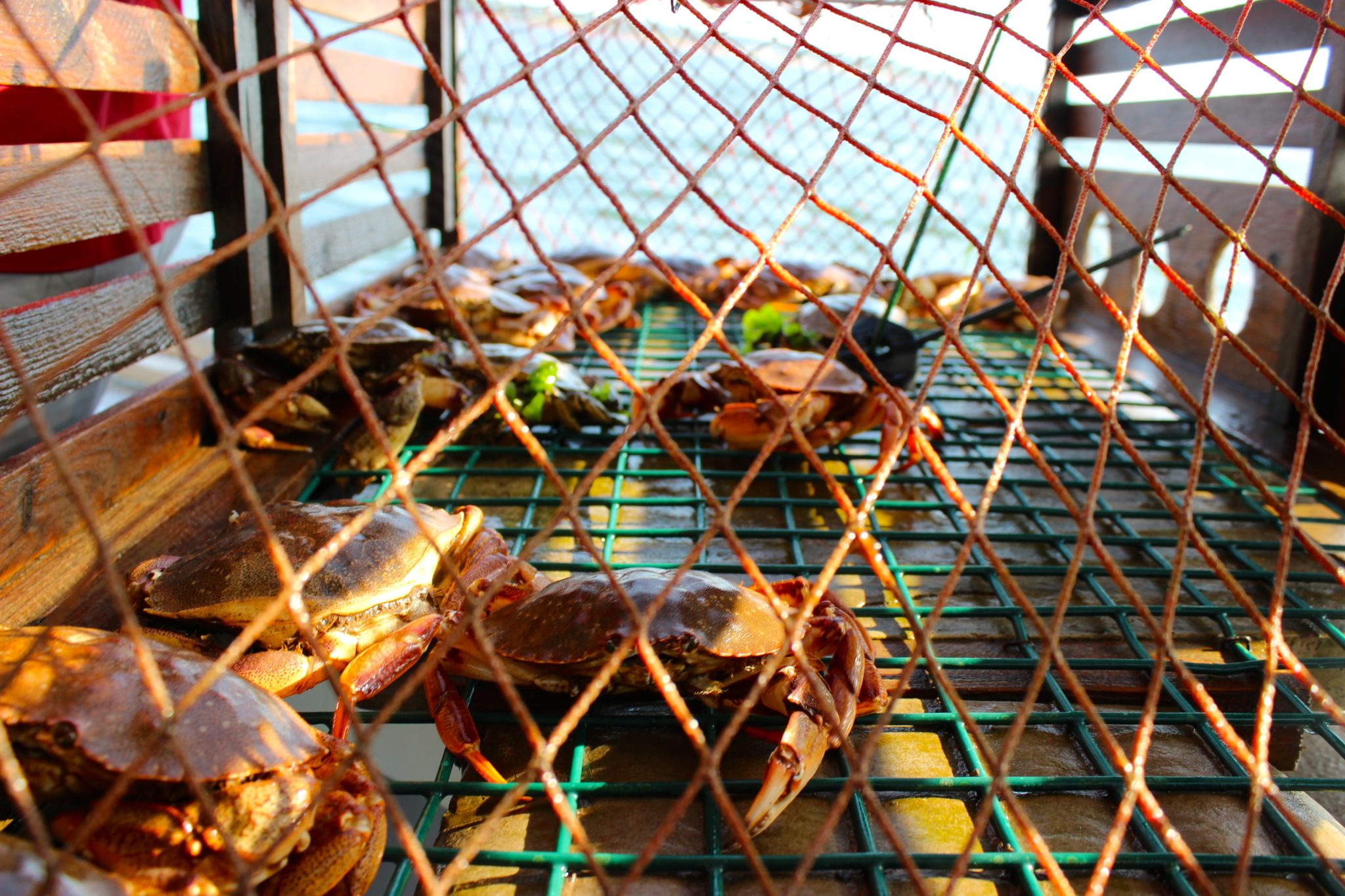 Crab traps, Top Notch Lobster Tours, PEI.