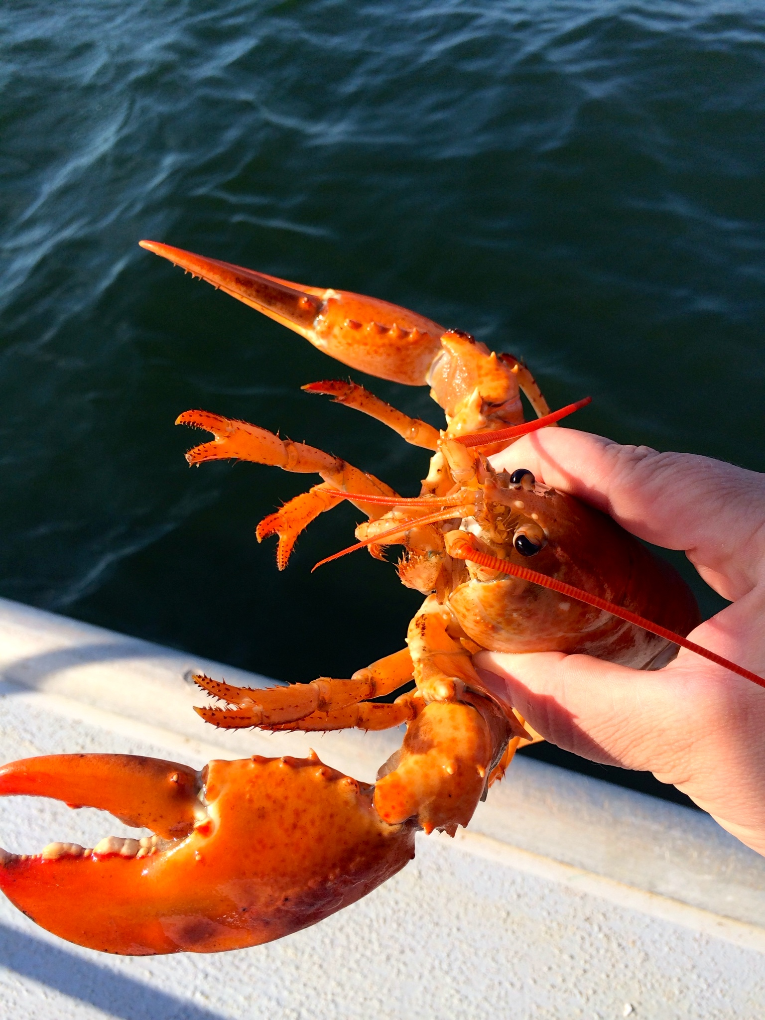 Holding my little orange lobster.